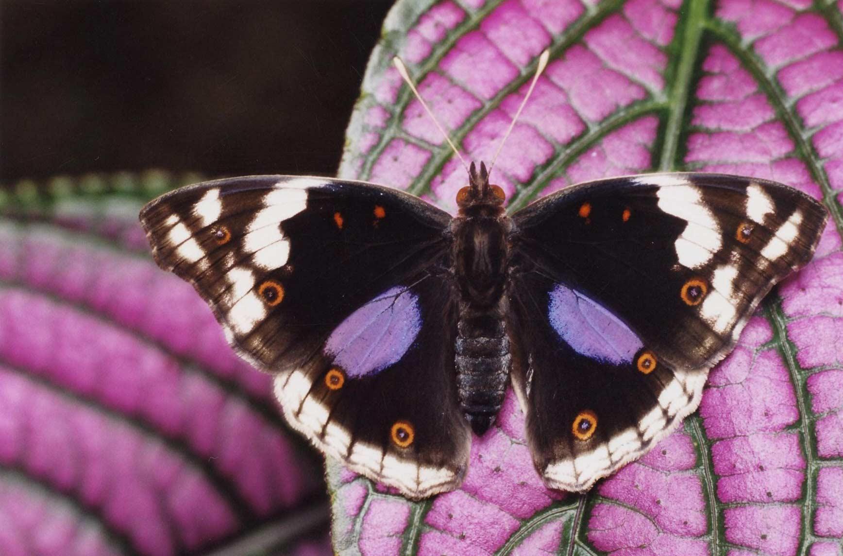 Naturospace honfleur jardin zoo serre papillons normandie - Images de papillon ...