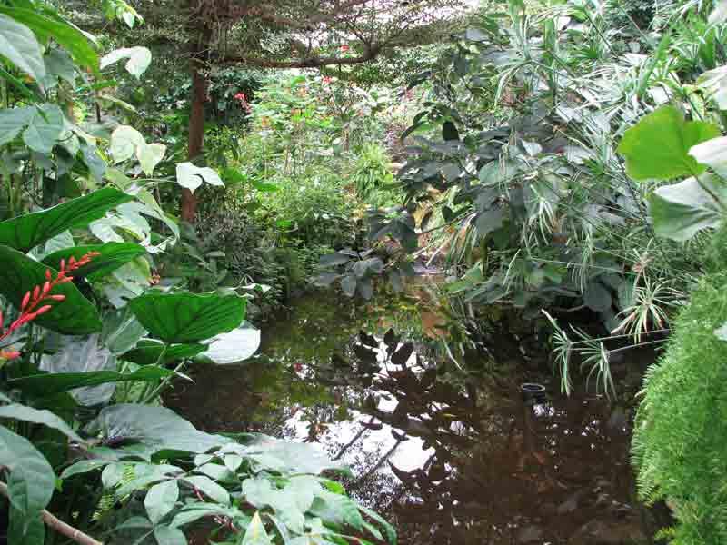 jardin-equatorial-naturospace