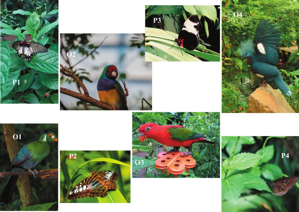 concours-photos-naturospace