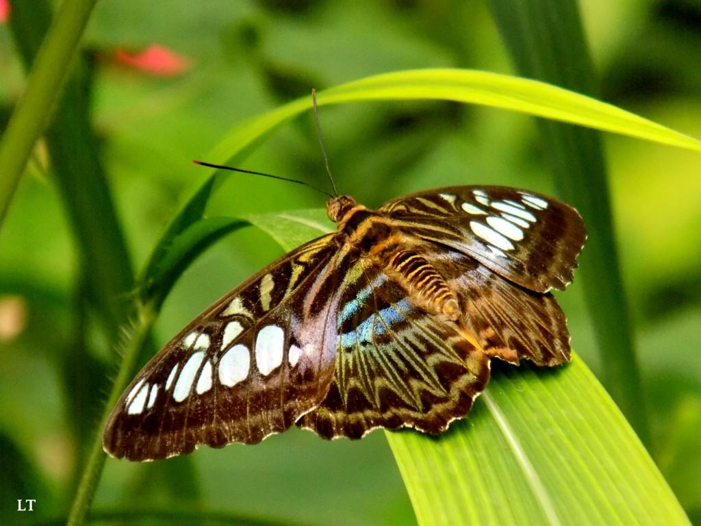 concours photo dessine un papillon