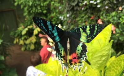 papiloon vacances de Noël à Honfleur en Normandie