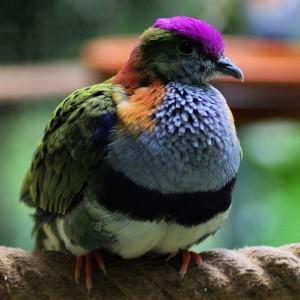 oiseau exotique en normandie à Honfleur