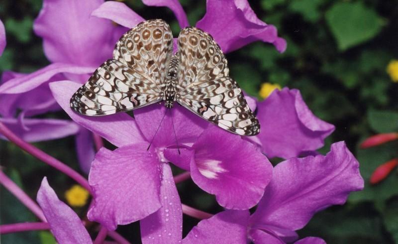 vacances à Honfleur : admirer des papillons