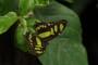 Papillons, touracos, vanille… un été magique au Naturospace Honfleur!